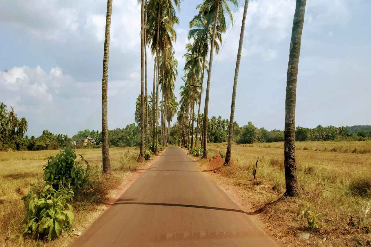 A coconut tree-lined dusty road.