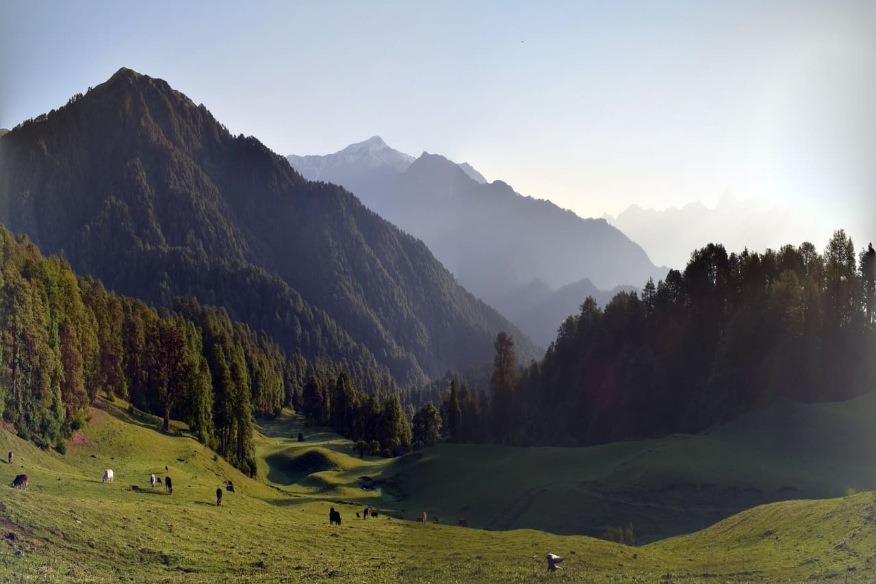 Animals graze on a lush green meadow surrounded by mountains