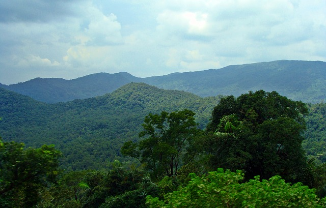 Lush forest with hills in the distance.