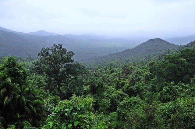 Forest with hills in the distance.