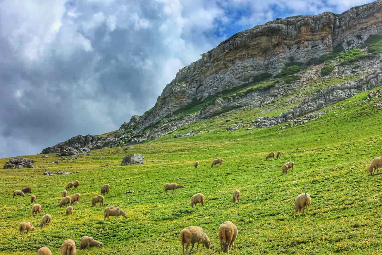 Herd of sheep grazing on a mountain slope