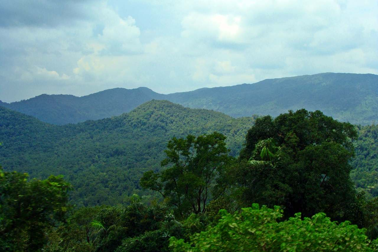 Green trees, undulating hills and a cloudy sky.
