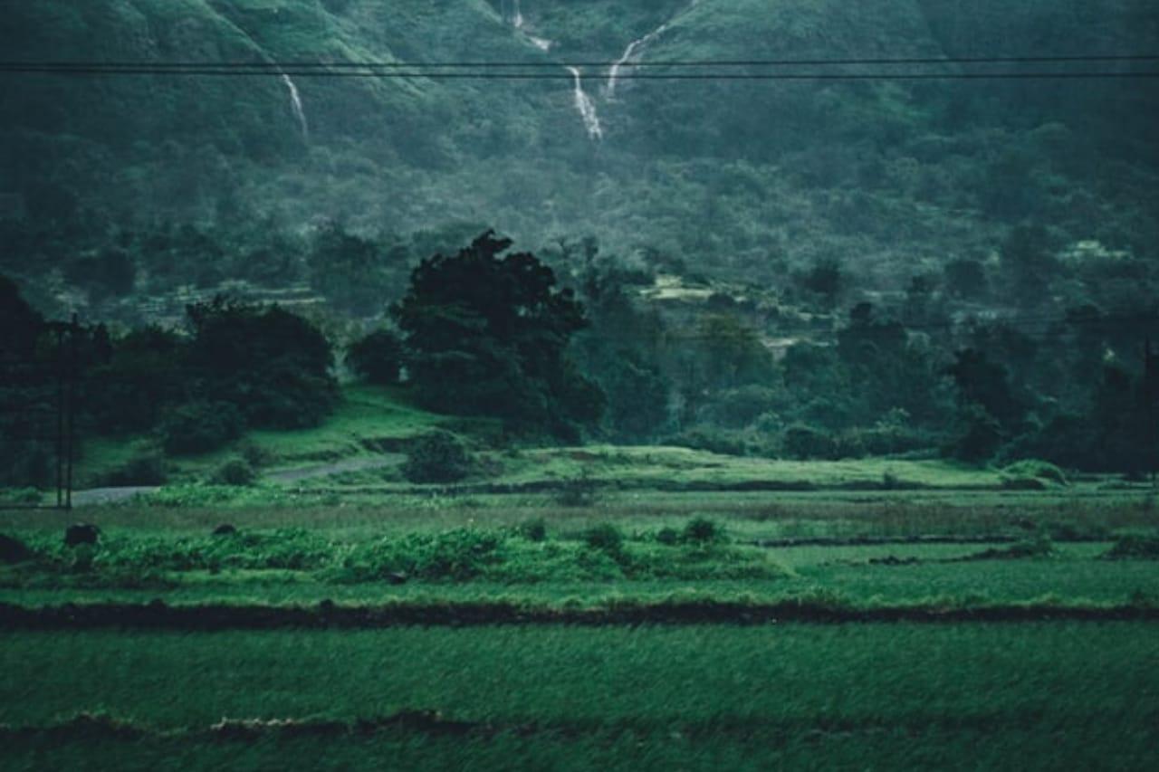 Landscape of green