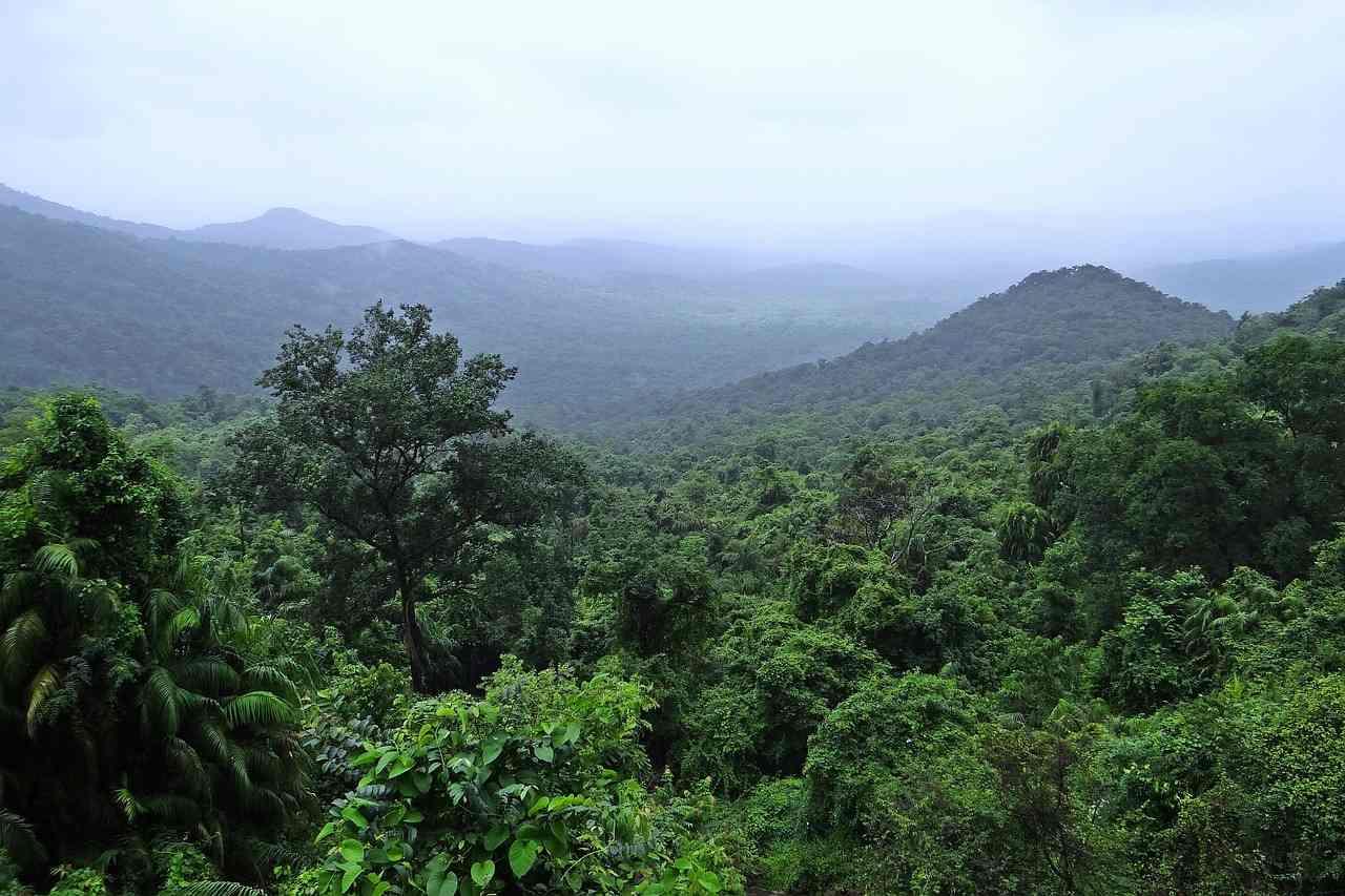 Landscape of forest covered hills.