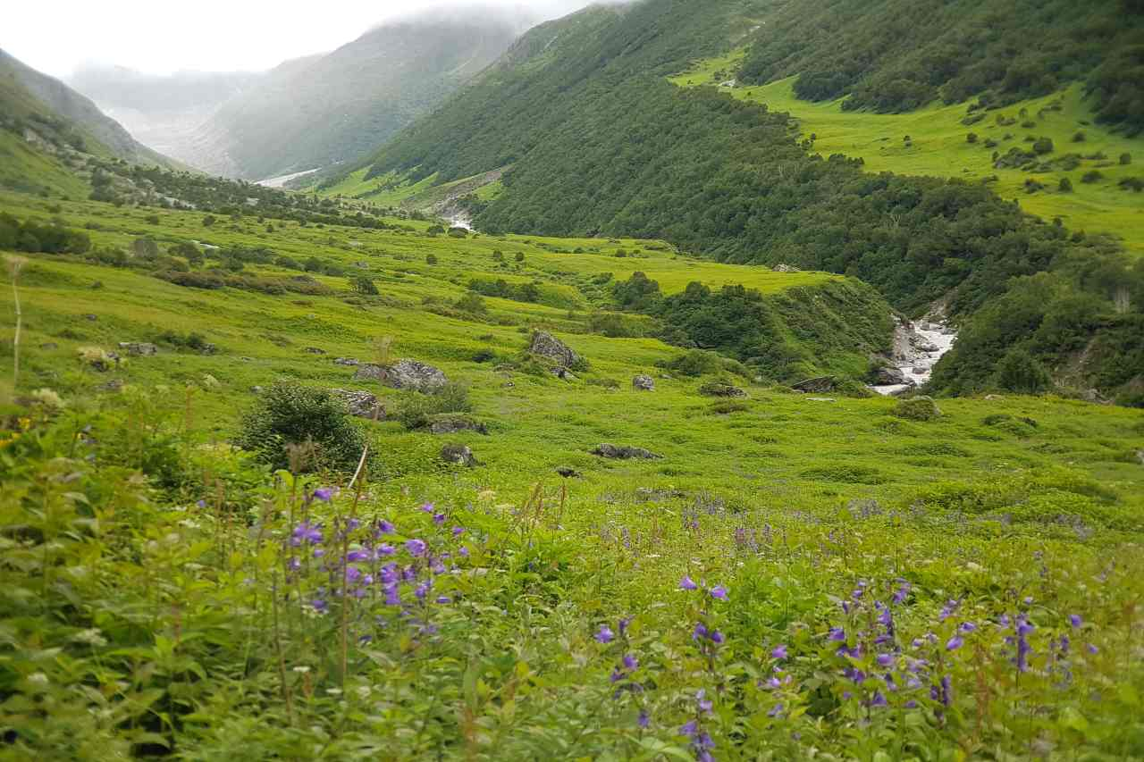 Landscape of green grasslands dotted with purple flowers.