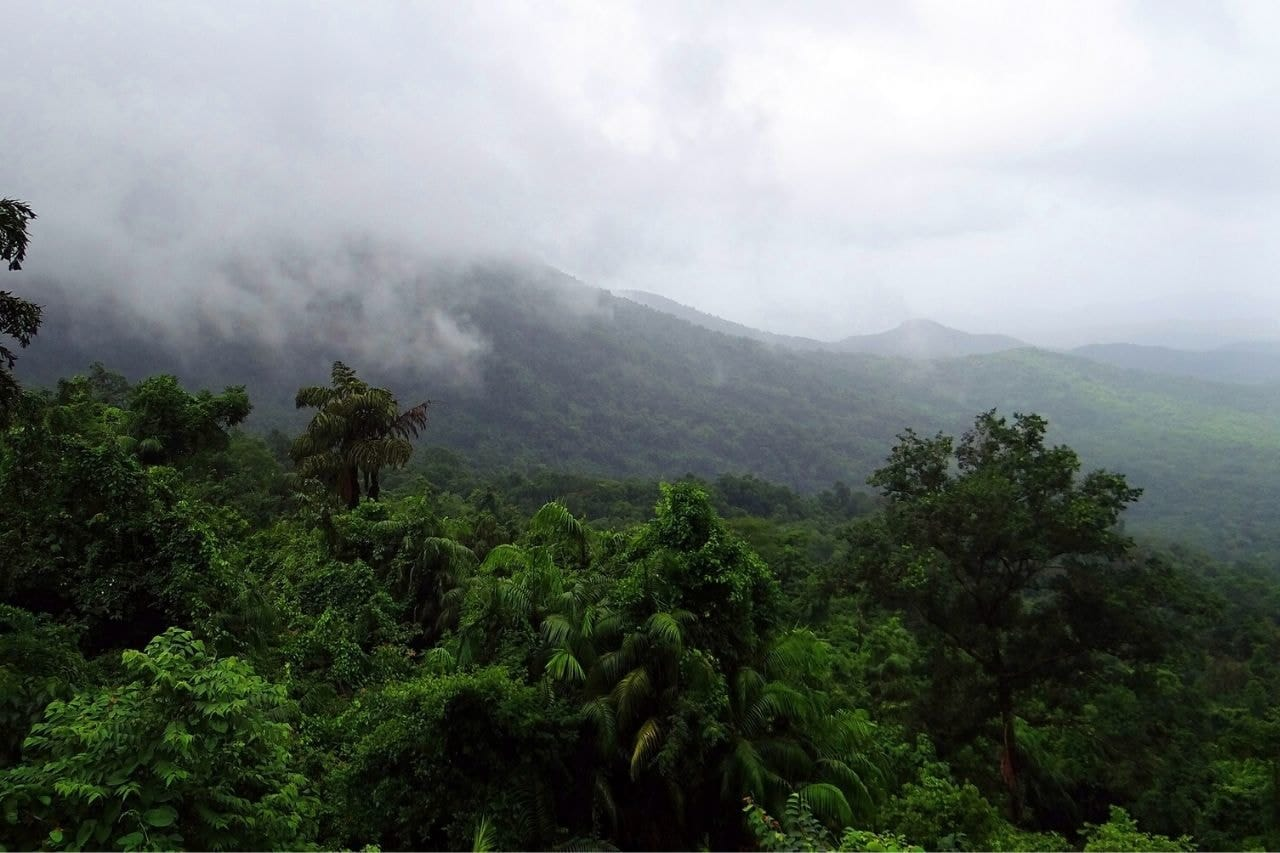 View of treetops on cloudy day