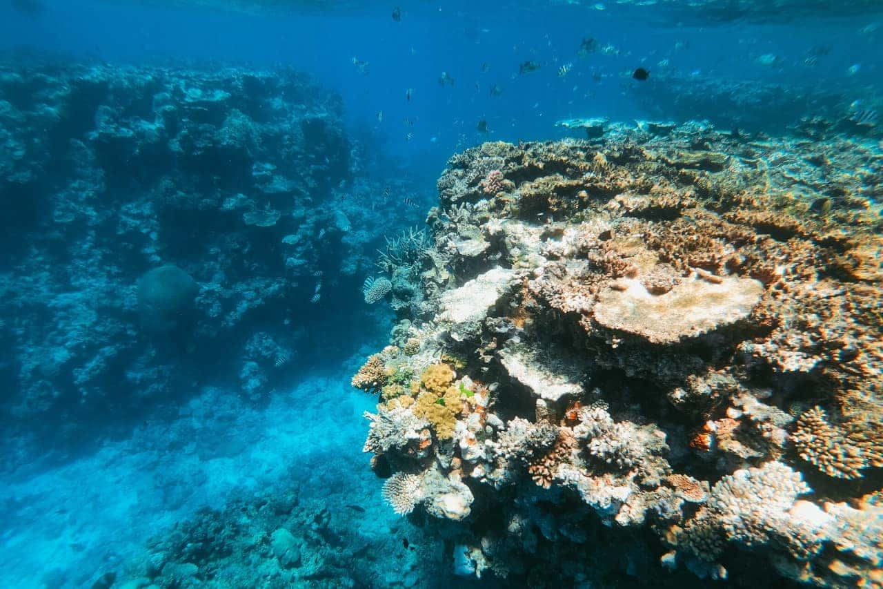 Coral reefs and small fish underwater