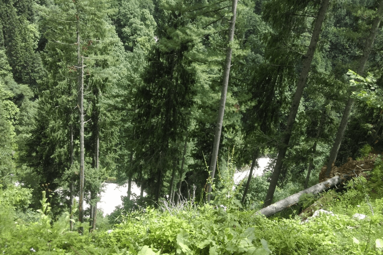 Glimpses of river through lush green forests.