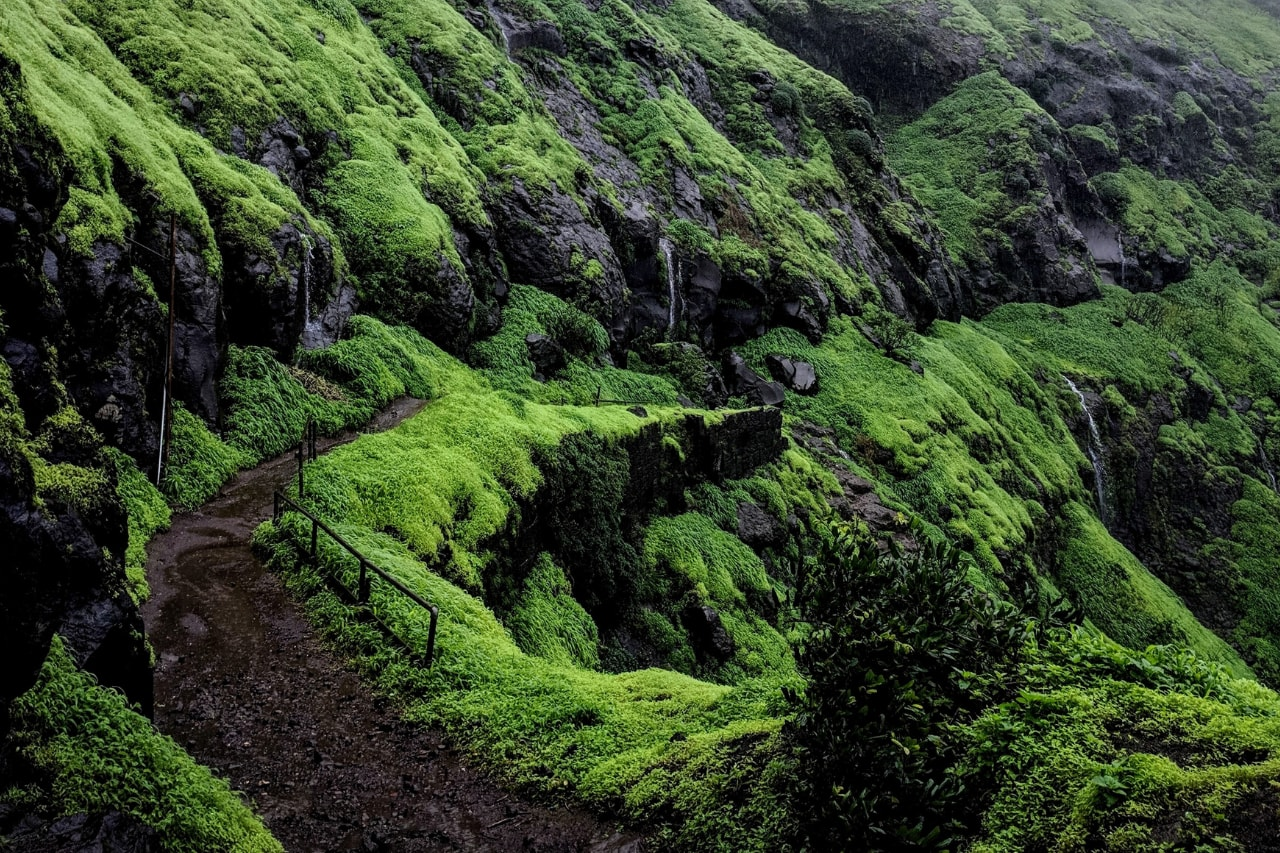 Winding pathway cuts through moss-covered trekking route