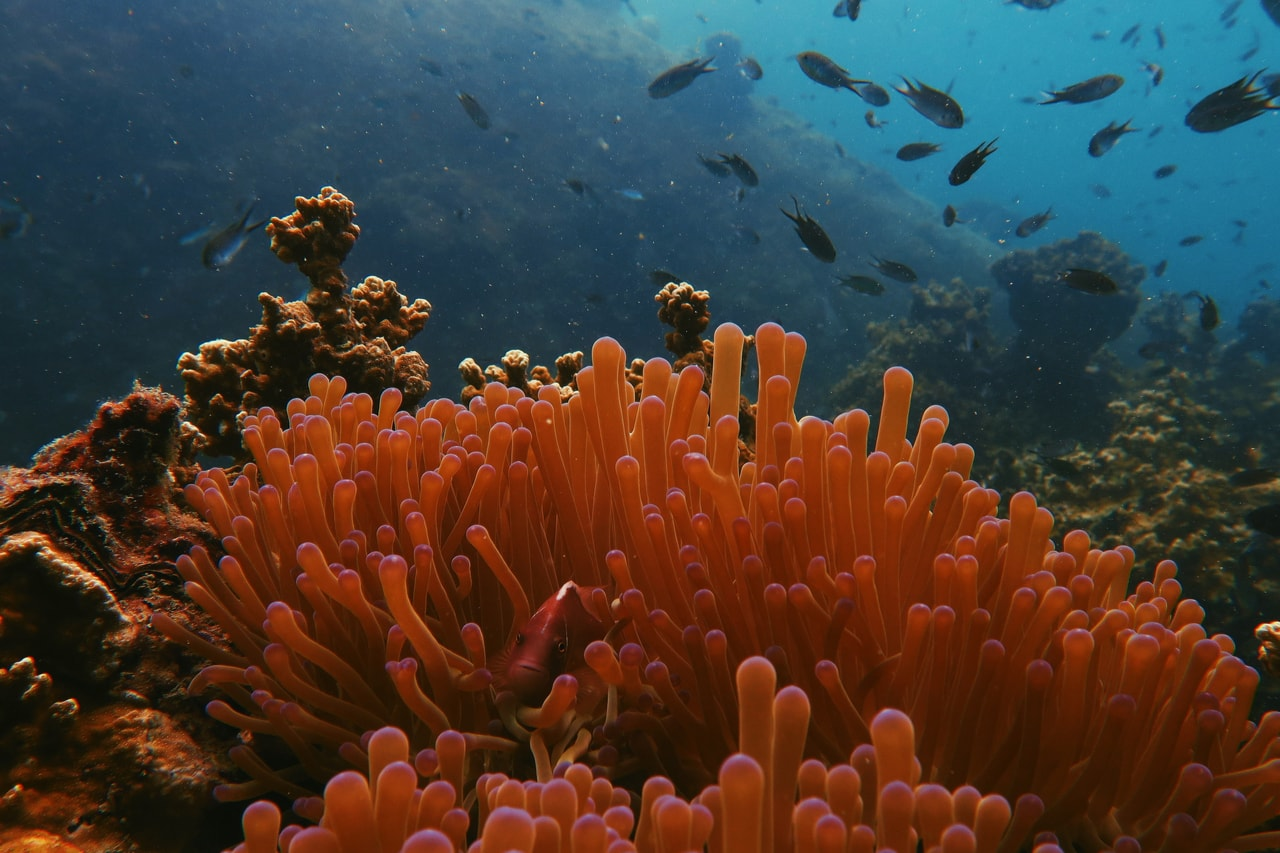 Vibrant orange coral with fish in the background