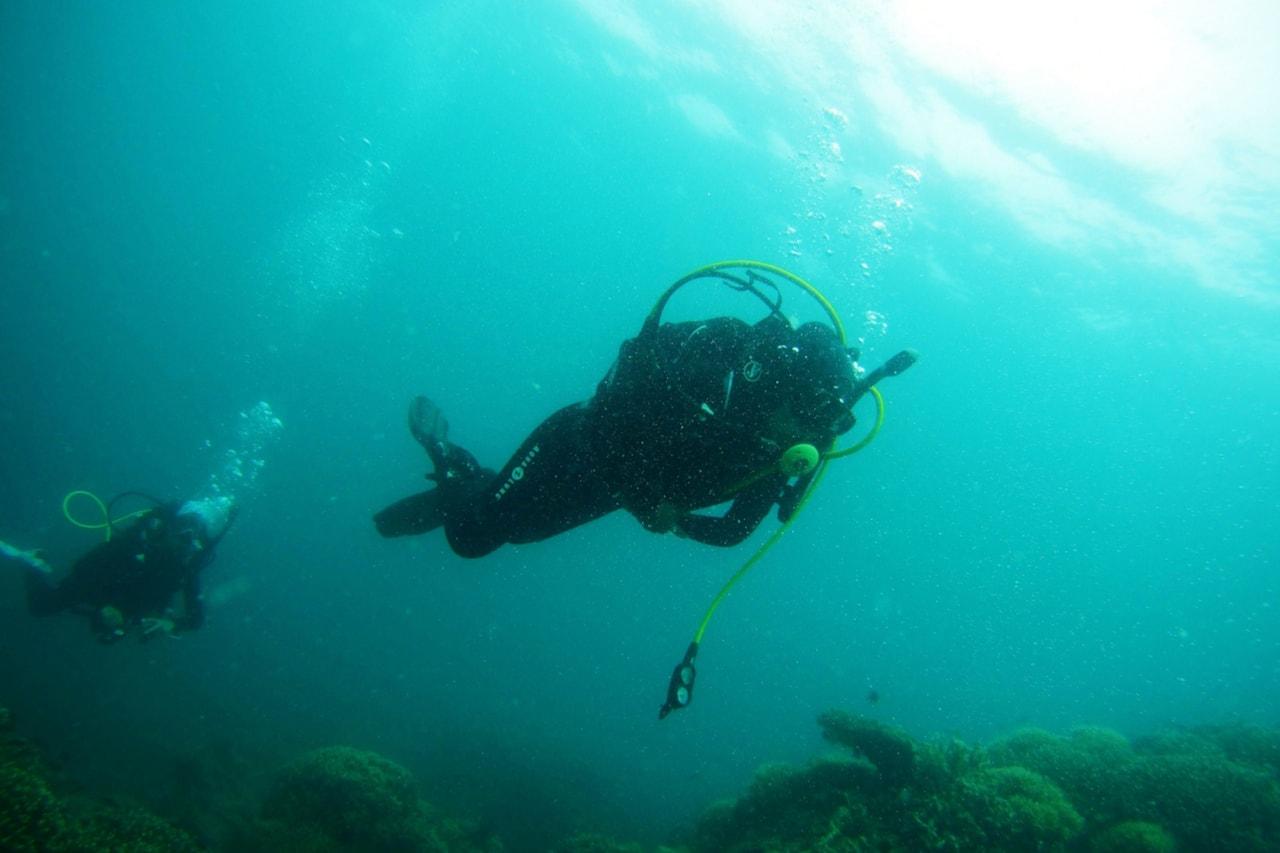 Scuba diver floats against a school of fish